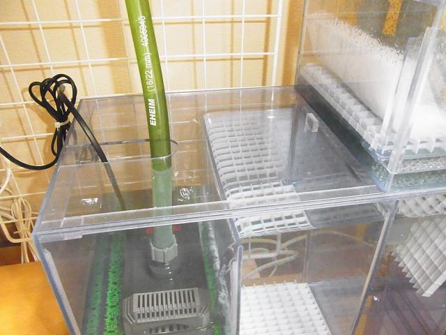 自作濾過槽にフタをセット
