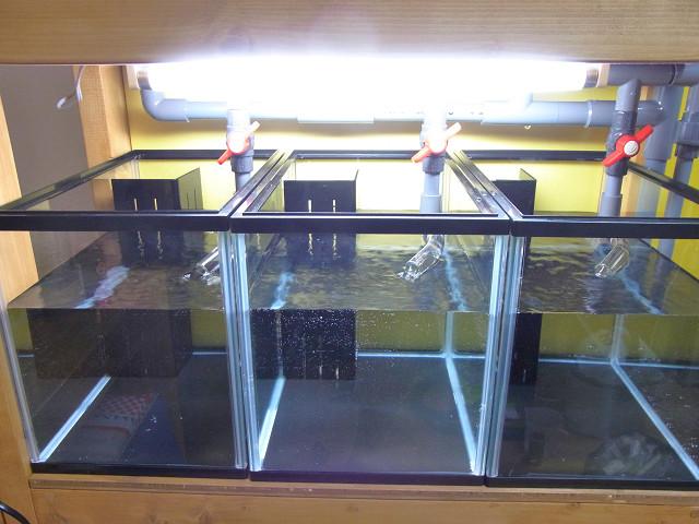 水槽上部に設置した照明からの光
