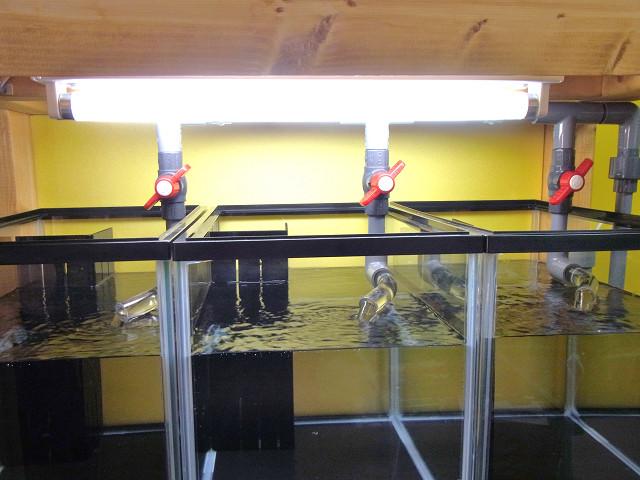 自作の多段連結オーバーフロー水槽台の目隠し板をハネ上げた状態