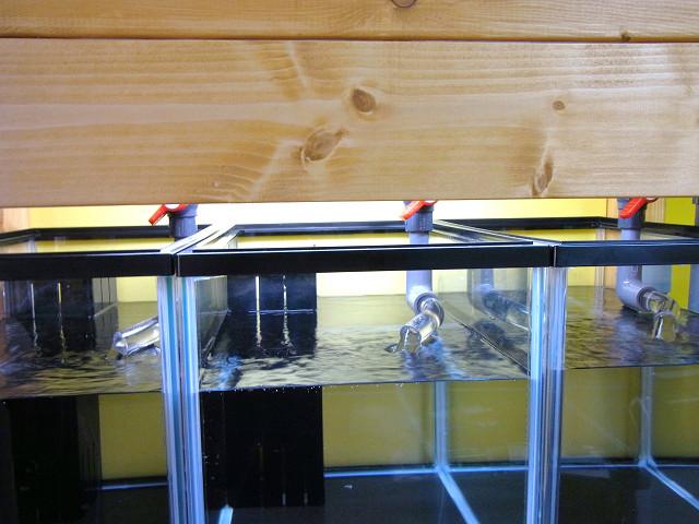 自作の多段連結オーバーフロー水槽台の目隠し板を閉じた状態