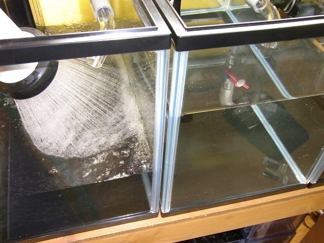 自作のオーバーフロー水槽に水を入れました