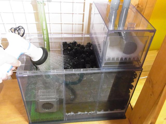 自作の塩ビ製濾過槽に水を入れました