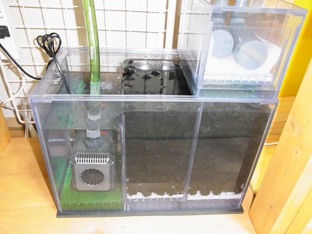 自作のオーバーフロー水槽の立ち上げ開始