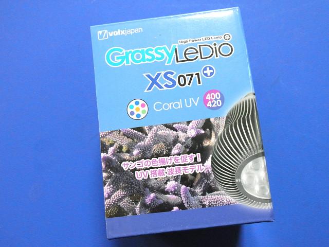 Grassy LeDio XS071 コーラルUV