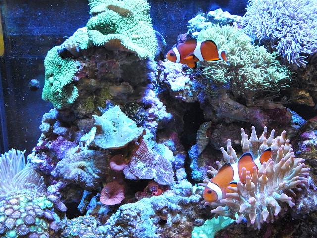 海道システム(海道水槽)の生体
