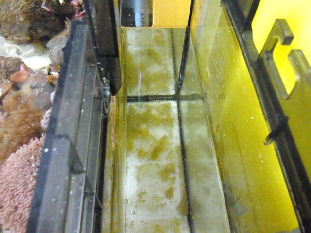 海道システム(海道水槽)の濾過槽室の掃除